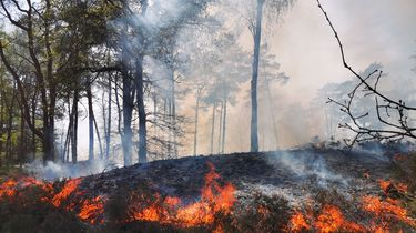 Wandelaar steekt uitwerpselen in brand en veroorzaakt bosbrand