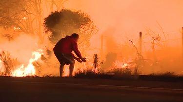 Video: Man redt konijn van hevige bosbrand