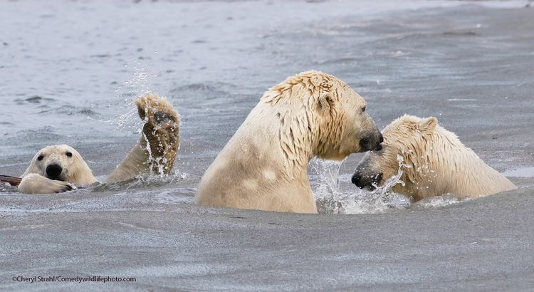 The photo bombing wave - The Comedy Wildlife Photography Awards 2021 / Cheryl Strahl