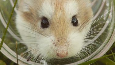 Vrouw moest hamster door wc spoelen tijdens vlucht