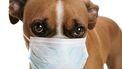 verkouden hond