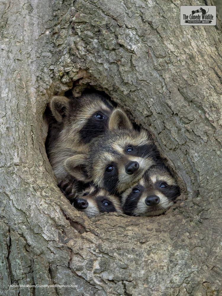 © Kevin Biskaborn/ 'Quarantine life' / Comedy Wildlife Photography Awards 2021