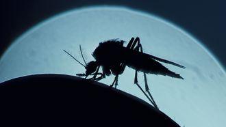 Op deze foto zie je een mug iemand prikken