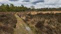 Foto van natuur in Drenthe
