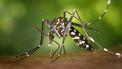 Muggen opsturen naar Wageningen
