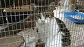 Dieren in de cel: van onschuldig avontuur tot echte prison break