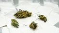 Op deze foto zie je zakjes cocaïne en stukjes cannabis. Drugsgebruik daalt fors in Amsterdam