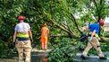Op deze foto is een omgevallen boom te zien, veroorzaakt door noodweer.