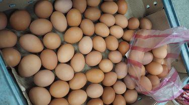 Eieren bevatten nog steeds het giftige fipronil