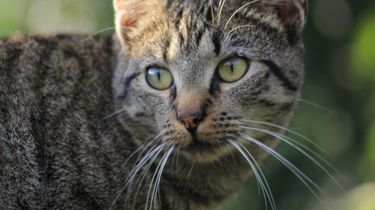 Vermiste kat komt na 17 jaar weer thuis