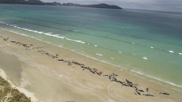 Meer dan honderd walvissen dood in Nieuw-Zeeland