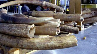 03 april - Groot-Brittannië verbied verkoop ivoor