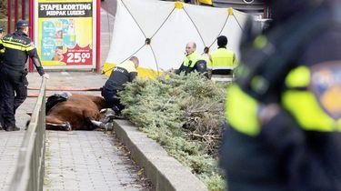 Politiepaard dat is omgekomen was kerngezond