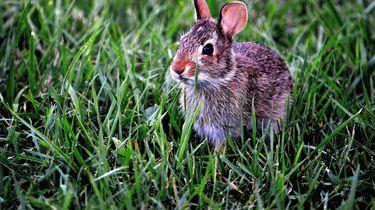 Gezin dumpt ziek konijn, Dierenambulance verbijsterd