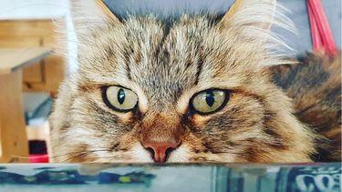 De 11-jarige kat Tula bezoekt graag een restaurant voor een kleine versnapering.