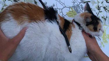Kat doorboort met pijl