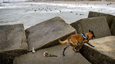 Speurhond zoekt lichaam vermiste surfer Scheveningen