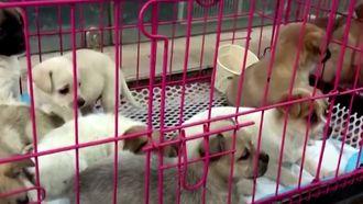 Chinese huisdieren Blind Box