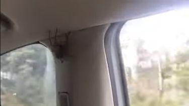 Op deze foto zie je de spin in de auto