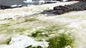Groene sneeuw