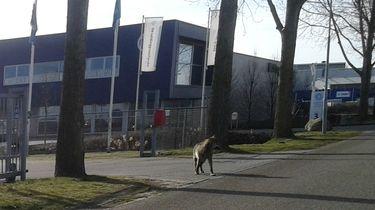 'Zie je een wolf? Juichen en foto maken!'