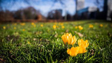 bloemen op grasveld
