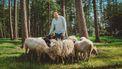Utrechtse schaapsherder geeft met Lammetjes TV 'een intiem inkijkje'