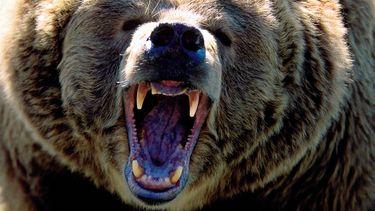 beren, beer