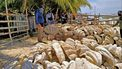 kustwacht stuit op gigantische schelpen