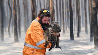 Kinderen halen met SOS Koala ruim 246.000 euro op