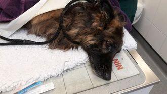 Foto van Bella nadat ze gered was