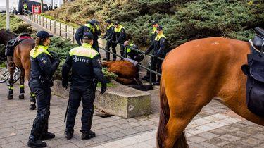 Politiepaard komt om tijdens demonstratie Nijmegen