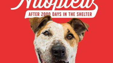 Hond na bijna zes jaar in asiel eindelijk geadopteerd