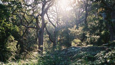 Man overleeft 18 dagen in Australische wildernis