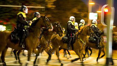 politiepaarden