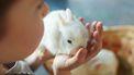 Een foto van een konijntje in de hand van een kind op dierendag