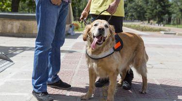Geleidehond stuurt baasje naar favoriete winkel