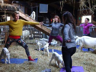 Yoga met geitjes op de geitenboerderij. Foto: Yogalesje.nl