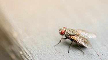 Fransman wil vlieg doden, maar blaast deel van zijn huis op