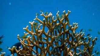 koraal rif
