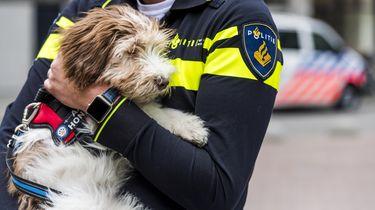 Politie op zoek naar kinderen doodgereden hond