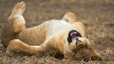 fotowedstrijd dierenfoto wedstrijd dieren Wild Life Photography Award