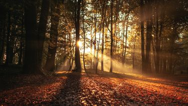 herfst, seizoen, najaar