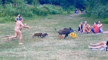 Een naakte man rent achter een zwijn en haar twee kleine zwijntjes aan.