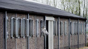 'Manegepaarden hebben een verschrikkelijk leven'