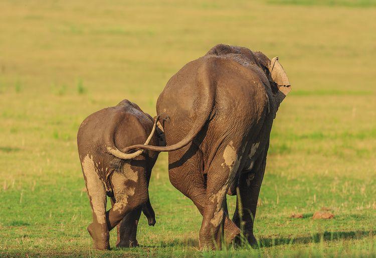 'Like mother like daughter' © JAGDEEP RAJPUT  / Comedy Wildlife Photo Awards 2020