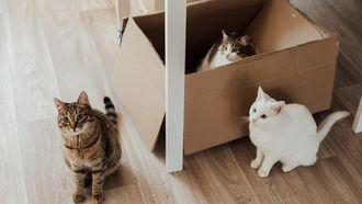 katten in dozen