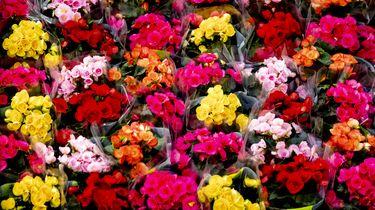 Een ziekenhuispatiënt stuurde 1400 bossen bloemen naar het ziekenhuispersoneel | Foto: ANP