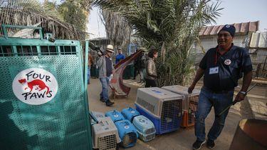 Tientallen dieren gered uit verwaarloosde dierentuin