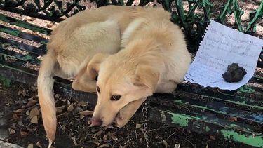 Hond achtergelaten op bankje met ontroerende brief van kind